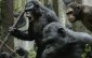 'Dawn Of The Planet Of The Apes' Debuts With $4.1M Thursday Night